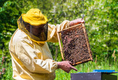 Apicultor en el trabajo con las abejas Foto de archivo
