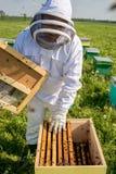 Apicultor en el trabajo durante el tiempo de primavera protegido por el traje Foto de archivo