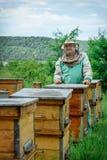 Apicultor en un colmenar cerca de las colmenas Apicultura apiary imagen de archivo libre de regalías