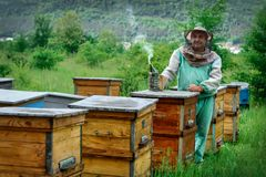 Apicultor en un colmenar cerca de las colmenas Apicultura apiary fotografía de archivo libre de regalías