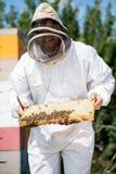 Apicultor Inspecting Honeycomb Frame en el colmenar Imagenes de archivo