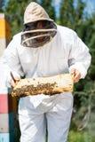 Apicultor Inspecting Honeycomb Frame en granja Imagen de archivo libre de regalías