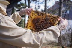 Apicultor joven que trabaja en la colmena en el jardín Fotografía de archivo libre de regalías