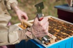 Apicultor joven que trabaja en la colmena en el jardín Imagenes de archivo