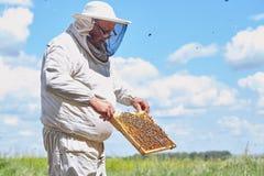 Apicultor mayor Collecting Honey Imágenes de archivo libres de regalías