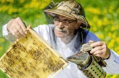 Apicultor mayor que hace la inspección en colmenar en la primavera Imagen de archivo libre de regalías