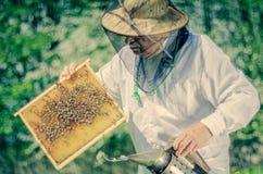 Apicultor mayor que hace la inspección en colmenar en la primavera Fotografía de archivo libre de regalías