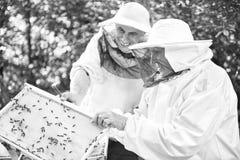 Apicultor mayor que trabaja en su colmenar Fotografía de archivo