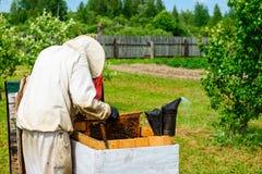 Apicultor no identificado que examina la caja de madera con las abejas Fotos de archivo