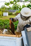 Apicultor no identificado que sostiene el panal con las abejas para controlar el si Imágenes de archivo libres de regalías