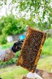 Apicultor no identificado que sostiene el panal con las abejas para controlar el si Imagen de archivo