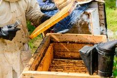 Apicultor no identificado que sostiene el panal con las abejas para controlar el si Foto de archivo