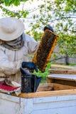 Apicultor no identificado que sostiene el panal con las abejas para controlar el si Imagen de archivo libre de regalías