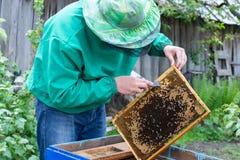 Apicultor que celebra un marco del panal con las abejas y la limpieza de abejones Imagen de archivo libre de regalías