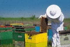 Apicultor que comprueba comprobando los peines de la miel Imagen de archivo