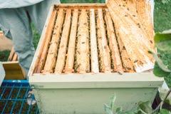 Apicultor que comprueba sus abejas Foto de archivo libre de regalías
