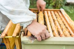 Apicultor que comprueba sus abejas Fotos de archivo