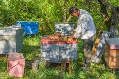 Apicultor que faz o exame de famílias da abelha imagens de stock