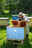 Apicultor que hace la inspección en colmenar Imagenes de archivo