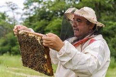 Apicultor que lleva a cabo el marco del panal con las abejas Imagen de archivo