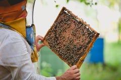 Apicultor que lleva a cabo el marco del panal con las abejas de trabajo al aire libre Fotos de archivo