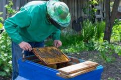 Apicultor que lleva a cabo un marco del panal con las abejas Fotografía de archivo