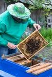 Apicultor que lleva a cabo un marco del panal con las abejas Imagen de archivo