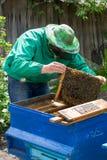 Apicultor que lleva a cabo un marco del panal con las abejas Foto de archivo libre de regalías