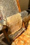 Apicultor que raspa del panal en granja de la abeja Fotos de archivo libres de regalías