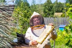 Apicultor que sostiene abejas y el panal Fotos de archivo