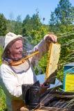 Apicultor que sostiene abejas y el panal Fotografía de archivo libre de regalías