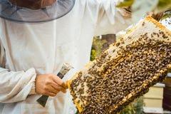 Apicultor que sostiene el panal con las abejas en sus manos Fotos de archivo