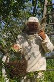 Apicultor que sostiene un enjambre de la abeja Imagen de archivo libre de regalías
