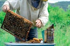 Apicultor que sostiene un panal lleno de abejas Apicultor en el workwear protector que examina el marco del panal en el colmenar Imagen de archivo