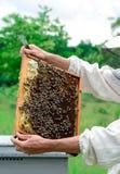 Apicultor que sostiene un panal lleno de abejas Apicultor en el workwear protector que examina el marco del panal en el colmenar Fotos de archivo