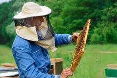 Apicultor que sostiene un panal lleno de abejas Apicultor en el workwear protector que examina el marco del panal en el colmenar Imagenes de archivo
