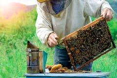Apicultor que sostiene un panal lleno de abejas Apicultor en el workwear protector que examina el marco del panal en el colmenar Imagen de archivo libre de regalías