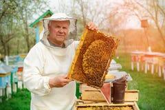 Apicultor que sostiene un panal lleno de abejas Apicultor en el workwear protector que examina el marco del panal en el colmenar  Fotos de archivo libres de regalías