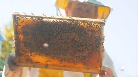 Apicultor que sostiene un panal lleno de abejas Apicultor Inspecting Honeycomb Frame en el colmenar Concepto de la apicultura len metrajes