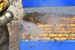Apicultor que trabaja con el tablero de la división de una colmena, para la miel c Foto de archivo