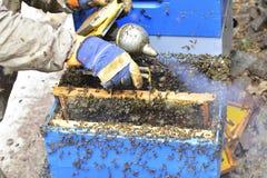 Apicultor que trabaja con el tablero de la división de una colmena, para la miel c Fotos de archivo libres de regalías