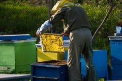 Apicultor que trabaja en colmena de la abeja Imagen de archivo