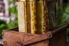 Apicultor que trabaja en colmena de la abeja Fotografía de archivo