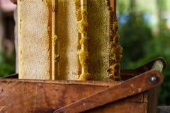 Apicultor que trabaja en colmena de la abeja Imagenes de archivo