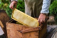 Apicultor que trabaja en colmena de la abeja Fotografía de archivo libre de regalías