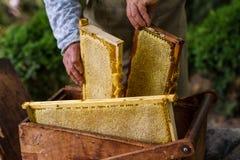 Apicultor que trabaja en colmena de la abeja Fotos de archivo