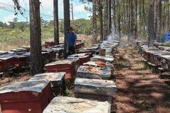 Apicultor que trabaja en granja de la abeja Foto de archivo