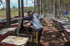 Apicultor que trabaja en granja de la abeja Fotografía de archivo