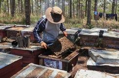 Apicultor que trabaja en granja de la abeja Fotos de archivo libres de regalías