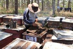 Apicultor que trabaja en granja de la abeja Imagenes de archivo